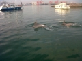 dolphins-13-sept13